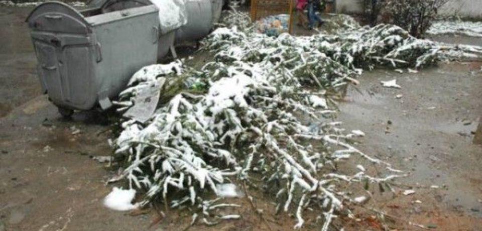 Brazii naturali, care au dat culoare si miros sărbătorilor de iarnă, nu trebuie aruncati la intamplare