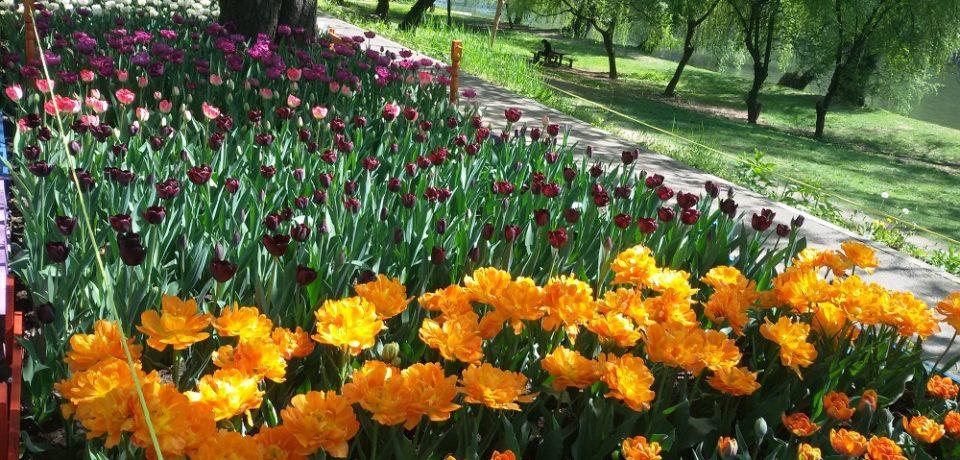 VREMEA de Florii și de Paște. Prognoza meteo pentru următoarele două săptămâni în Crișana