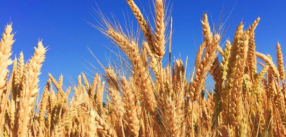 Harta celor mai productive judete din agricultura. Cate cereale se produc in Bihor