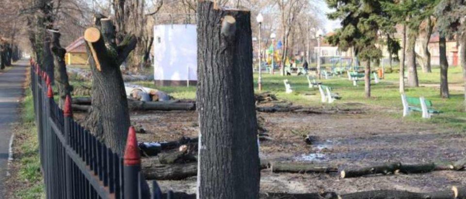 A cui e vina? Scandalul defrisarilor din Parcul Balcescu continua. Video
