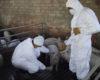 Precizări ale Direcției Sanitare Veterinare și pentru Siguranța Alimentelor Bihor. Comunicat