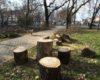 NU ne place. Se taie arbori verzi si sanatosi din Parcul Balcescu