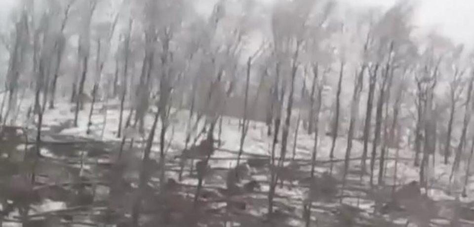 Vremea face ravagii în țară. O pădure din județul vecin Bihorului a fost doborâta de vânt și de ploaia înghețată