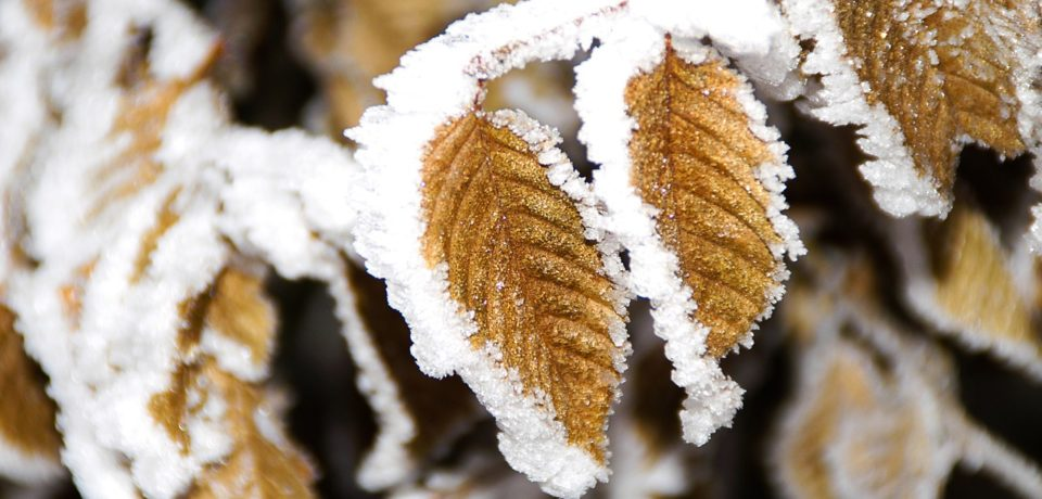 Meteorologii prognozeaza un val de frig polar