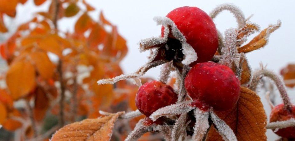 Vremea se răceşte! Prognoza meteo pe două săptămâni pentru Crișana