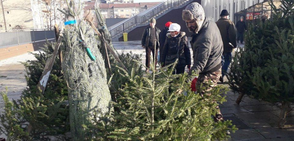 Primii brazi de Crăciun au ajuns în aceste zile în piețele orădene