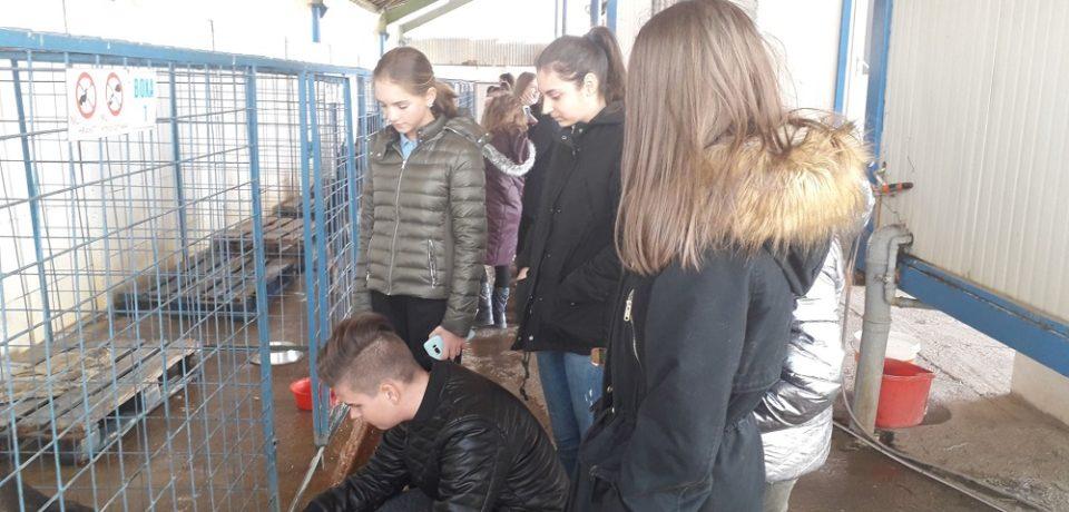 Elevi de la Școala Nicolae Bălcescu, la Adăpostul Grivei