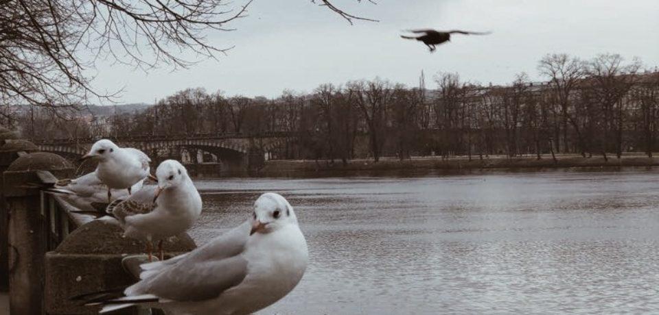 Ziua Internaţională a Păsărilor se celebrează pe data 1 aprilie