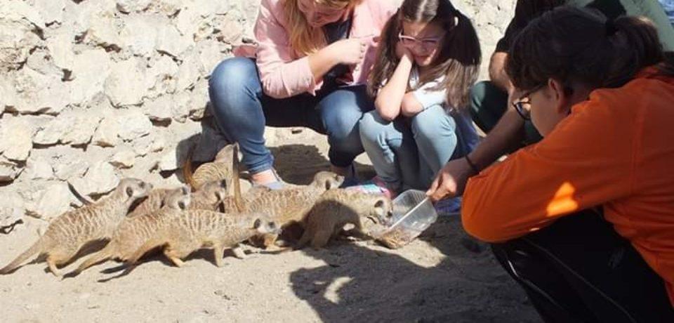 Zoo Oradea:  Ziua Părinților Adoptivi se amână