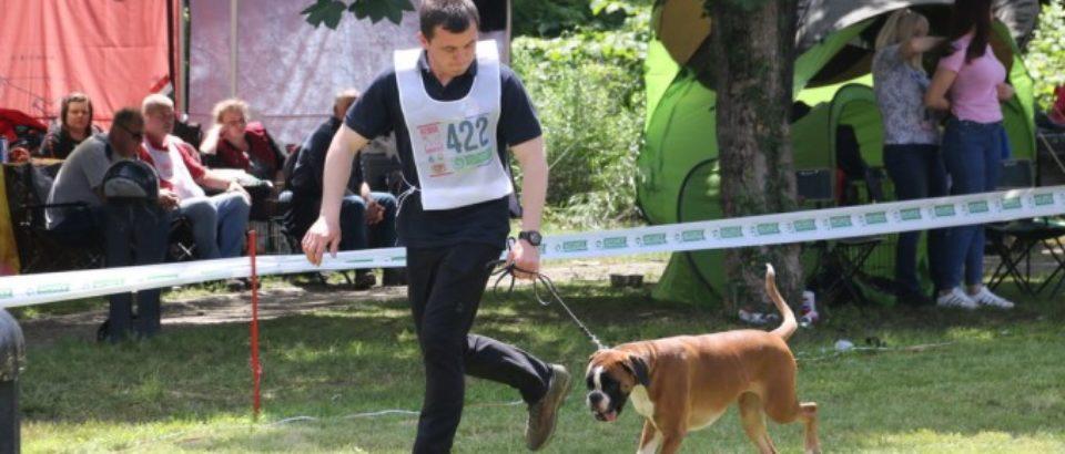 Campionatul Mondial de Frumuseţe pentru rasa Boxer a avut loc la Oradea