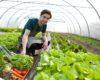 AFIR: Finanţări nerambursabile de câte 15.000 de euro pentru micii fermieri