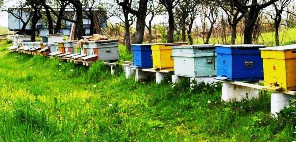 Ministerul Agriculturii vrea să le dea apicultorilor un ajutor de minimis de 37 milioane lei