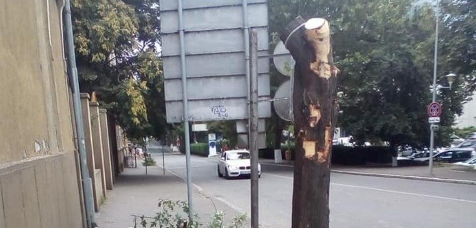 USR Bihor: Adevărata Capitală Verde a României
