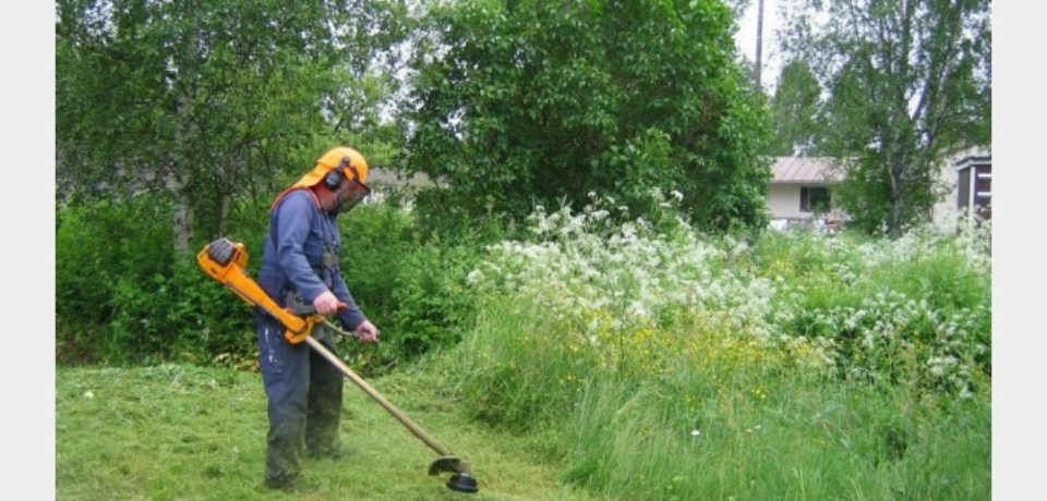 Regulamentul de întreţinere a spaţiilor verzi din Oradea, atacat în contencios